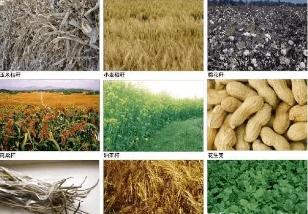 我国农作物秸秆主要有小麦秸秆、水稻秸秆、玉米秸秆、大豆秸秆、棉花秸等,每年秸秆年产量为7亿t左右,列世界之首,占全世界秸秆总量的30%左右。