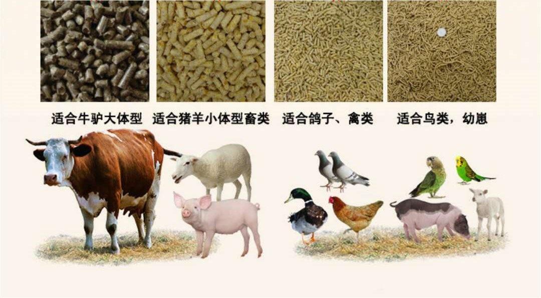 养殖户福利来了,饲料颗粒机在养殖中的作用分析